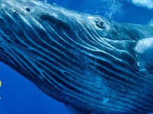 Whales: Giants of the Deep