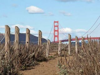 The Golden Gate Bridge along a trail
