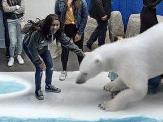 Augmented reality polar bear