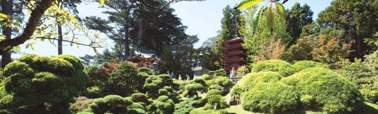 San Francisco's iconic Japanese Tea Garden is welcoming visitors again. Here's what you need to know for your next visit.