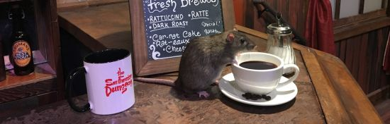 Rat Cafe at the San Francisco Dungeon