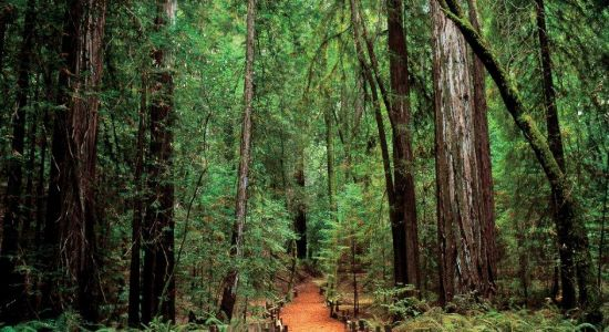 armstrong_woods_guerneville.jpg